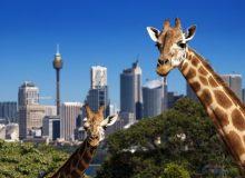کنپارس پرونده مهاجرت به استرالیا می پذیرد