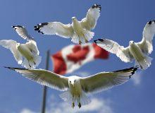 کانادا دومین کشور برتر جهان برای مهاجران است